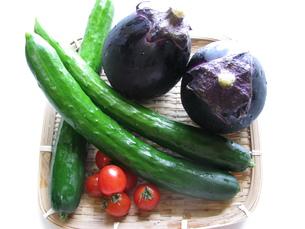 野菜の写真素材 [FYI00377452]