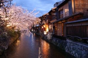 京の春「祇園の夜さくら」の写真素材 [FYI00377554]