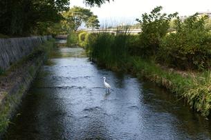 夏の川の写真素材 [FYI00377582]