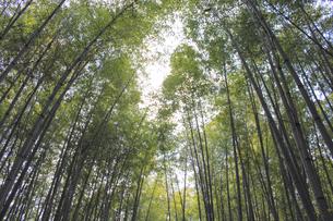 竹やぶの写真素材 [FYI00377773]