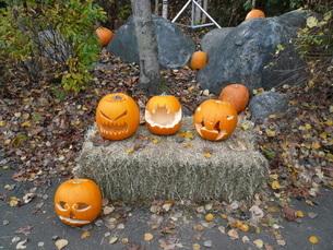 ハロウィーン かぼちゃの写真素材 [FYI00377800]