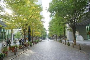 秋の街並みの写真素材 [FYI00377855]