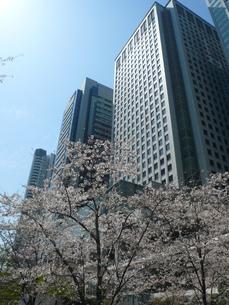 高層ビルと桜の写真素材 [FYI00377863]