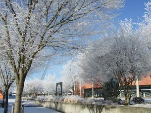 アメリカの街並み 雪化粧の写真素材 [FYI00377882]