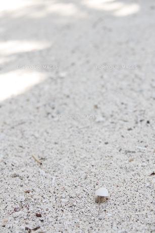 ビーチのかわいい貝殻のやどかりの写真素材 [FYI00378003]