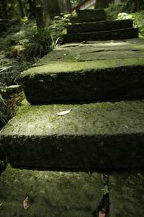 参道の石段の写真素材 [FYI00378063]