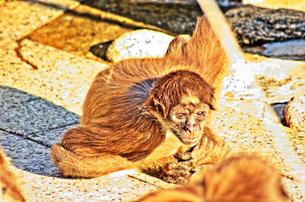 サルの写真素材 [FYI00378235]