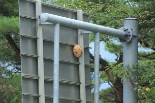 スズメバチの巣の写真素材 [FYI00378345]