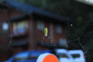 蜘蛛の日常の写真素材 [FYI00378359]