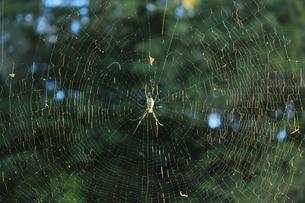 蜘蛛の営みの写真素材 [FYI00378369]