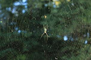 蜘蛛の巣と蜘蛛の写真素材 [FYI00378374]