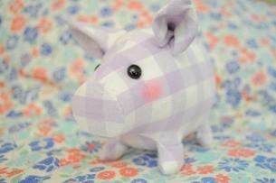 豚/花柄/チェック/ぬいぐるみの写真素材 [FYI00378550]