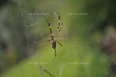 蜘蛛の写真素材 [FYI00378556]