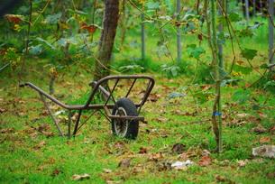 ブドウ園と一輪車の写真素材 [FYI00378662]