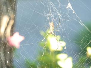 蜘蛛の写真素材 [FYI00378784]