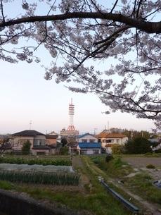 桜の木の下から見える鉄塔の写真素材 [FYI00378852]
