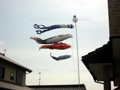 鯉のぼりの写真素材 [FYI00378867]