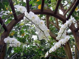 ランの花の写真素材 [FYI00378884]