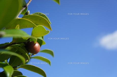 秋の木の実の素材 [FYI00378892]