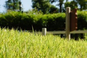 午後の芝生の写真素材 [FYI00378903]