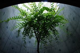 日差しの中の樹木の写真素材 [FYI00378913]