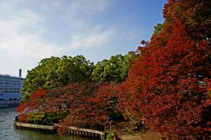 川辺の公園の紅葉の写真素材 [FYI00378920]