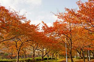 秋の公園の写真素材 [FYI00378938]