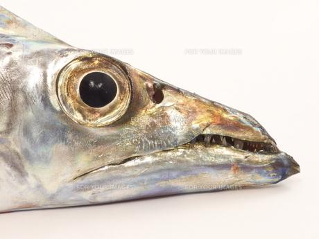 太刀魚のアップの写真素材 [FYI00379038]