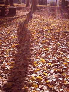 秋の公園の写真素材 [FYI00379042]