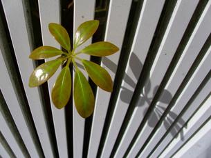 木の葉の写真素材 [FYI00379059]