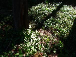 木漏れ日の作る影の写真素材 [FYI00379074]