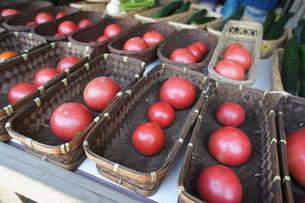 カゴのトマトの写真素材 [FYI00379088]