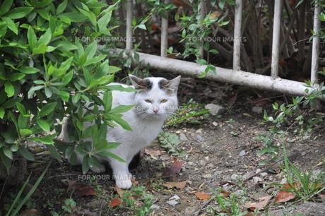 怒り顔の猫の写真素材 [FYI00379169]