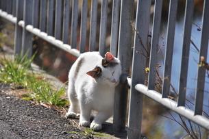 甘える猫の写真素材 [FYI00379185]