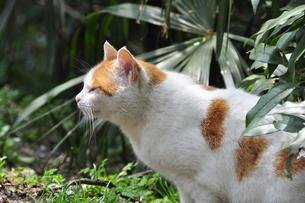 眠そうな猫の写真素材 [FYI00379189]
