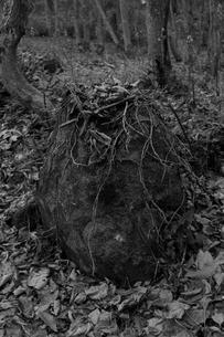 枯れ葉の岩の写真素材 [FYI00379275]
