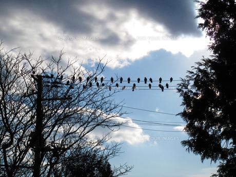 鳥の群れの写真素材 [FYI00379290]