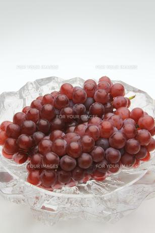 葡萄 ぶどう ブドウ(デラウェア)の素材 [FYI00379329]