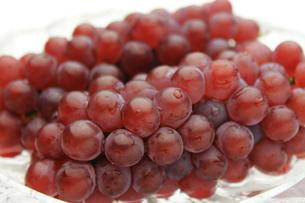 葡萄 ぶどう ブドウ(デラウェア)の写真素材 [FYI00379332]