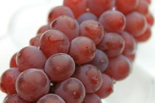 葡萄 ぶどう ブドウ(デラウェア)の写真素材 [FYI00379341]