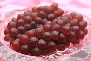 葡萄 ぶどう ブドウ(デラウェア)の素材 [FYI00379344]