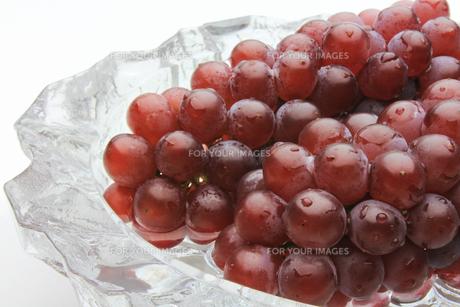 葡萄 ぶどう ブドウ(デラウェア)の素材 [FYI00379359]