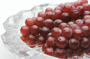 葡萄 ぶどう ブドウ(デラウェア)の写真素材 [FYI00379359]