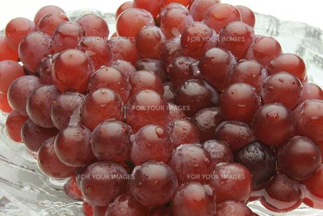 葡萄 ぶどう ブドウ(デラウェア)の素材 [FYI00379360]
