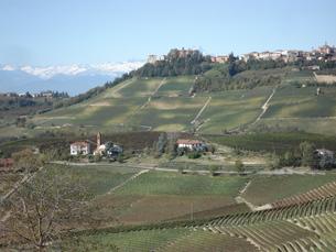 イタリア・アルプスを望むピエモンテのブドウ畑の写真素材 [FYI00379472]