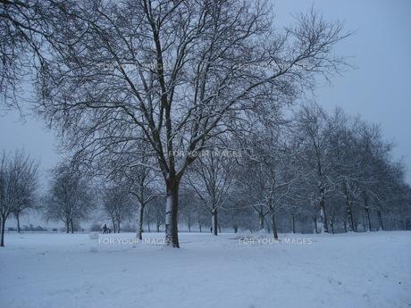 イギリス・ウィンザー城 雪の日のロングウォークの写真素材 [FYI00379473]