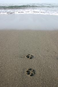 犬の足跡の写真素材 [FYI00379587]
