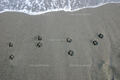 犬の足跡の写真素材 [FYI00379600]