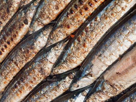 秋刀魚の写真素材 [FYI00381068]