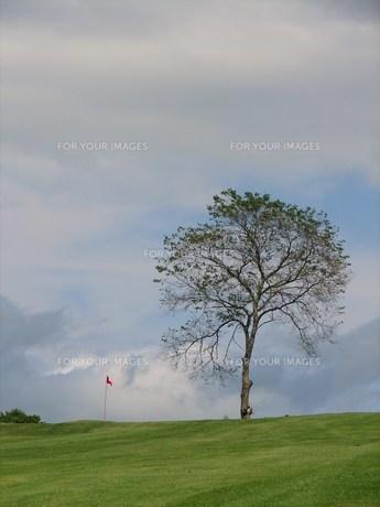 ゴルフ場の写真素材 [FYI00381202]